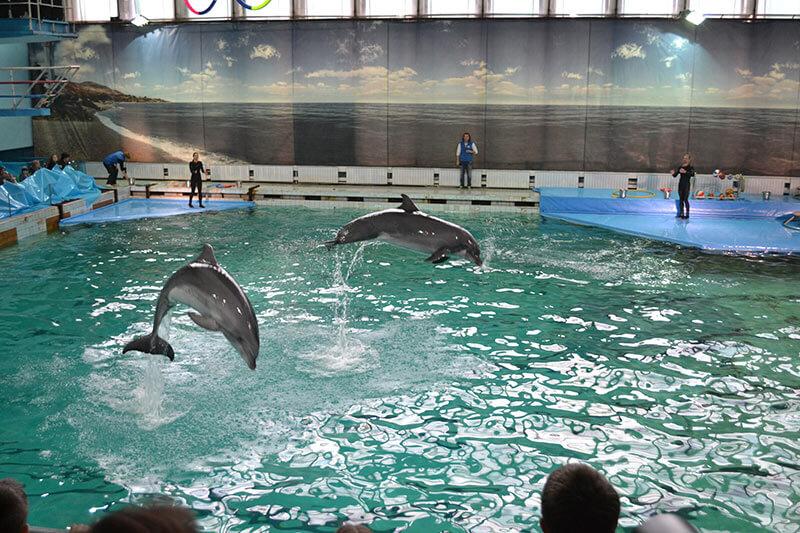 Дельфинарий в Санкт-Петербурге