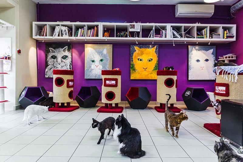 Кафе-музей Республика кошек и котов